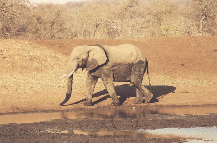 Don't make Elephants angry - my elephant experience in Botswana