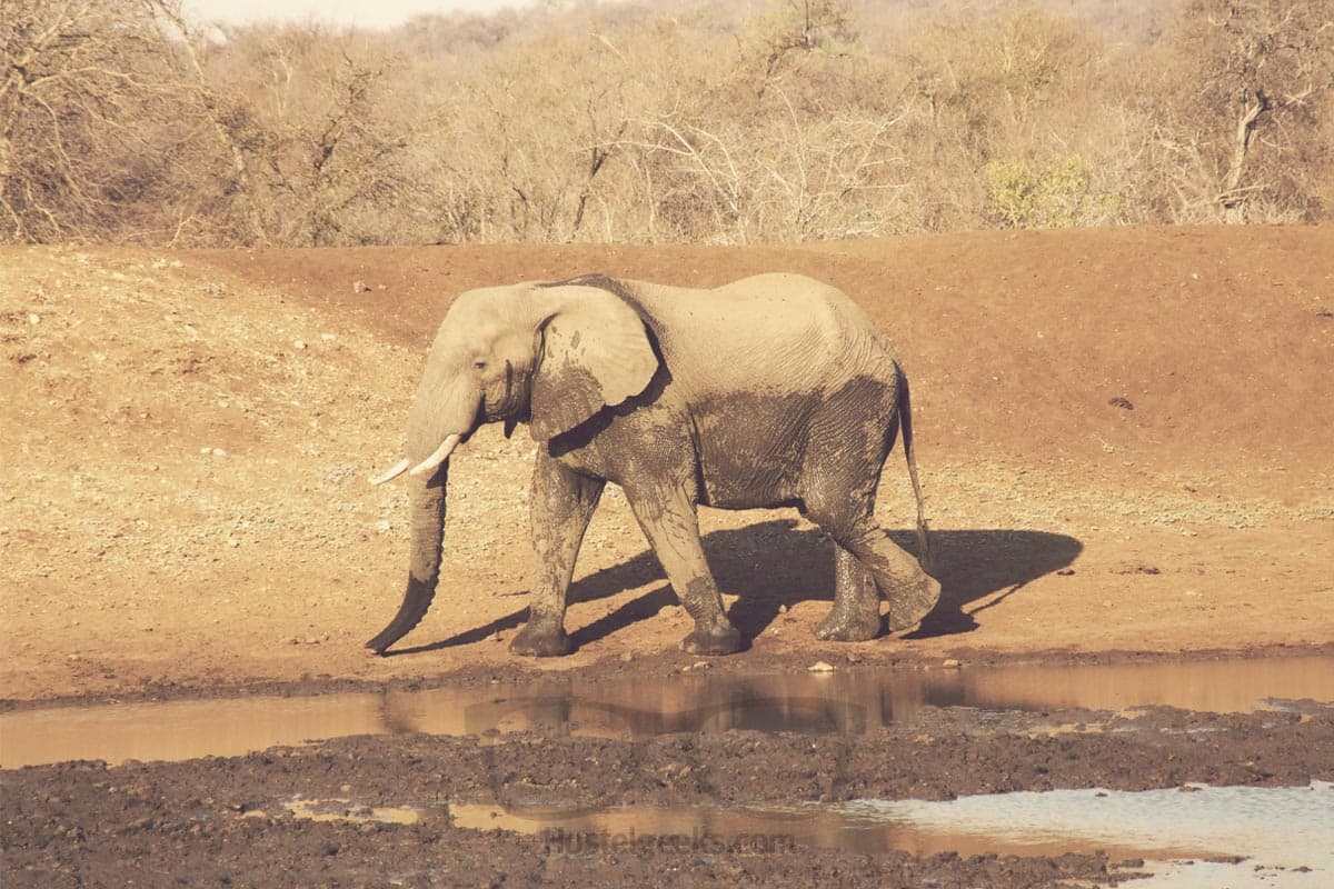 Don't make Elephants angry - my elephant experience in Botswana