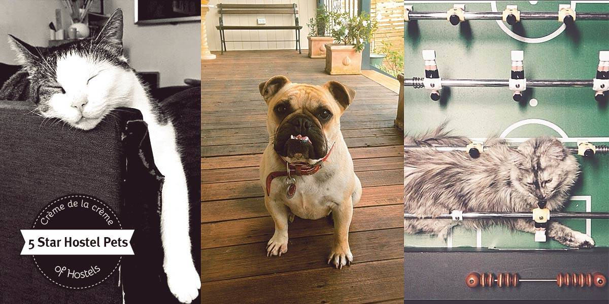 Pets at 5 Star Hostels - From Cats, Dogs, Apps, and Hashtags
