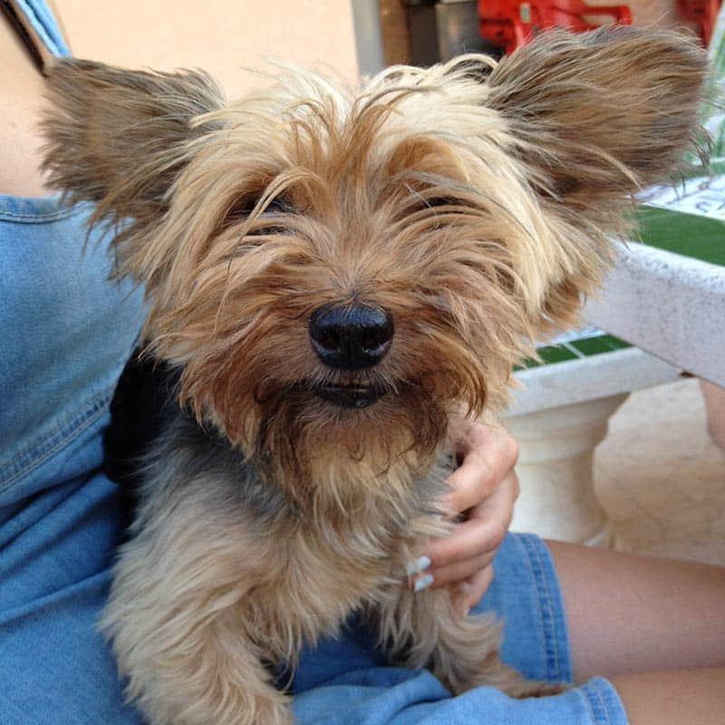 Einsteig, the little future Dog at Hostelgeeks