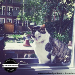 Enjoing the sun and the Cocomama Hostel Garden - Joop knows what's good!