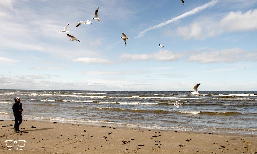 Seagulls - a sign of a nearby beach and the never-ending ocean