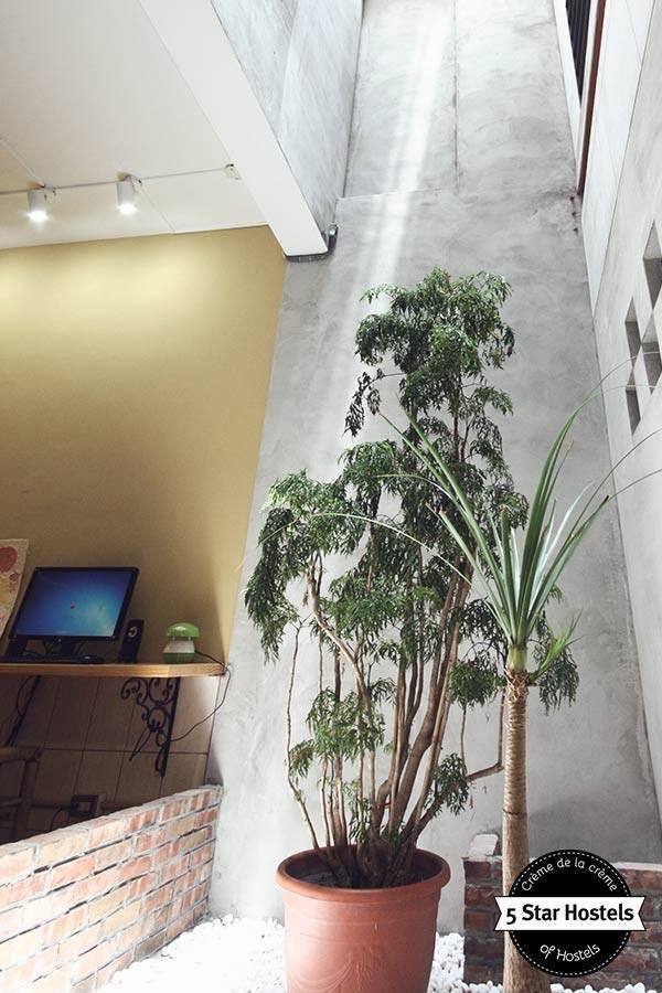 Plants at Puli Center Center Hostel Taiwan