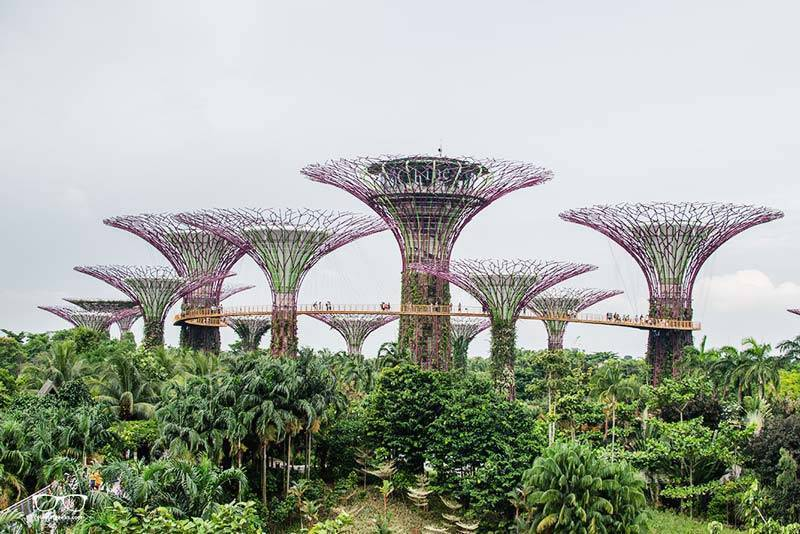 Gardens By The Bay - a highlight when visiting Singapore