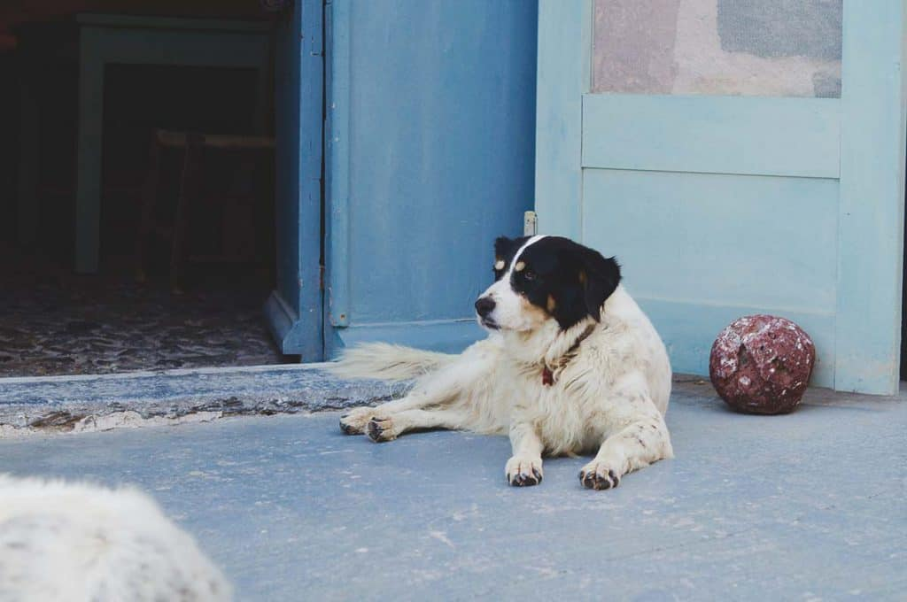 Dog-friendly hostel: One of two dogs at CAVELAND Hostel