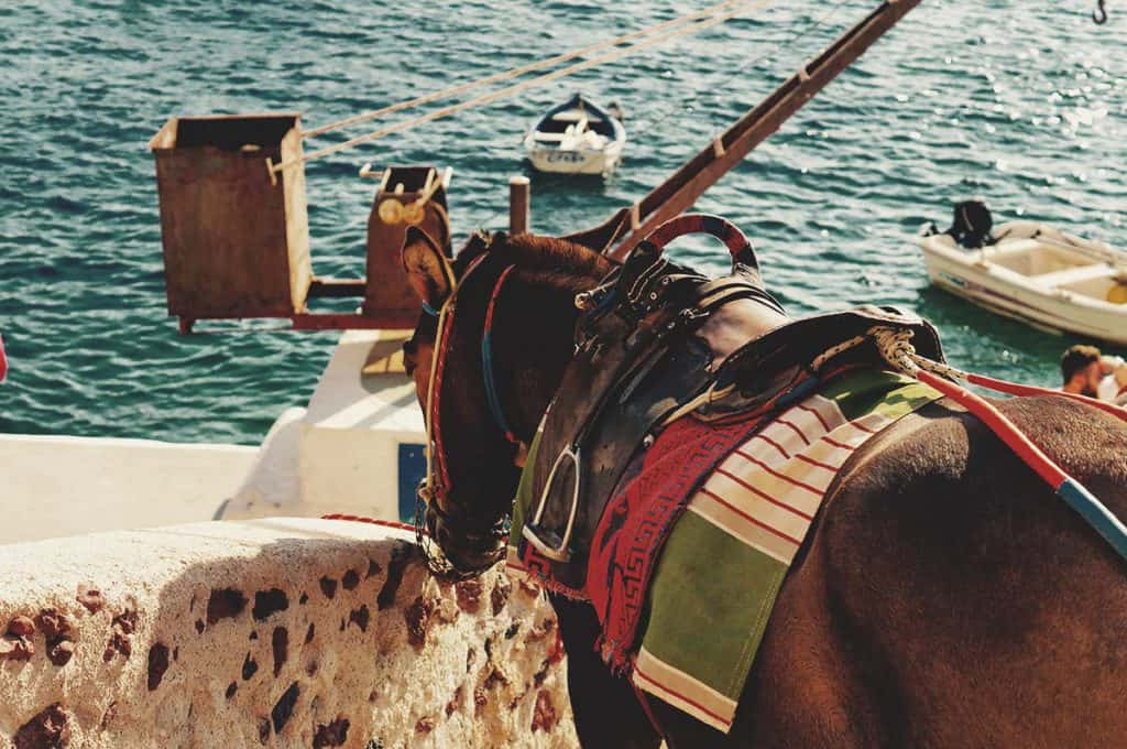 Santorini's donkeys are well-known