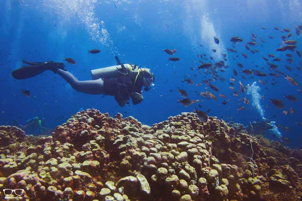 Discovering fishes, turtles and corals in Gili Trawangan with Dili Divers