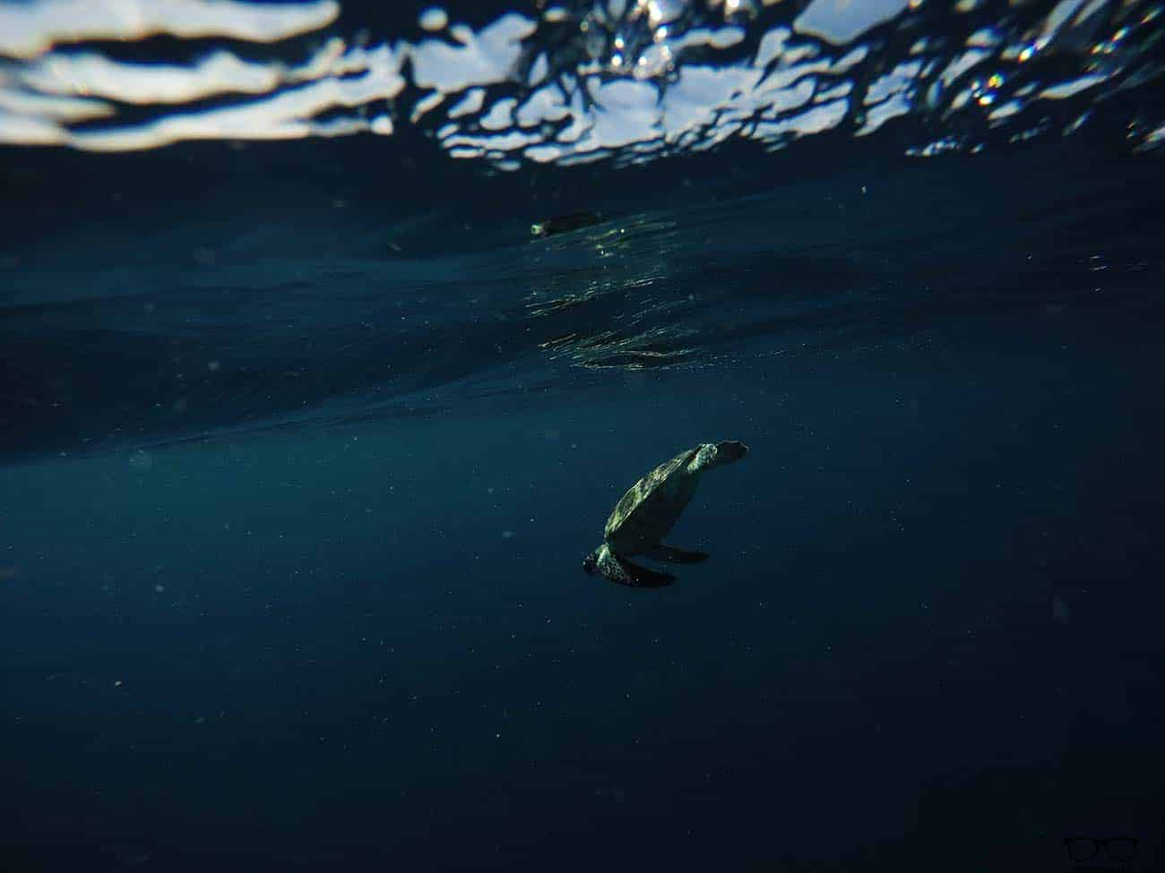 Beauty of the Ocean - a turtle enjoying its waters