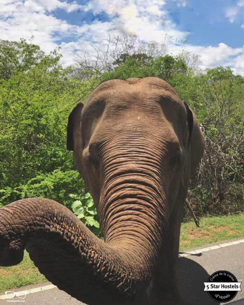Things to do in Sri Lanka: see elephants!