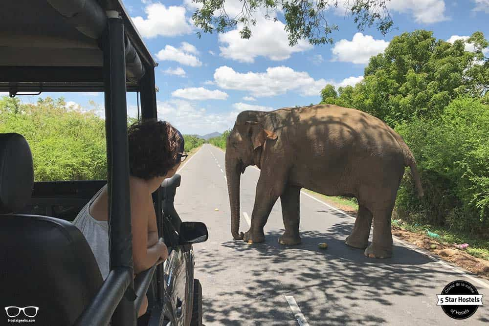 Things to do in Sri Lanka: go on a Safari