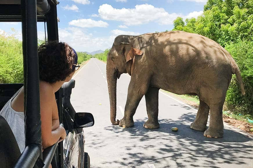 Asking for directions: We had an amazing time at Yala National Park, Sri Lanka.