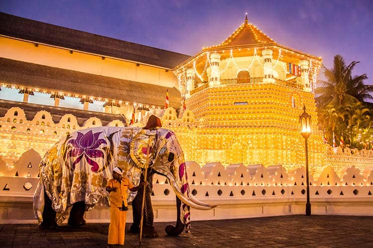The Esala Perahera Festival with Elephants in Kandy