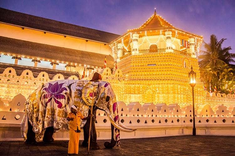The Esala Perahera Festival with Elephants in Kandy