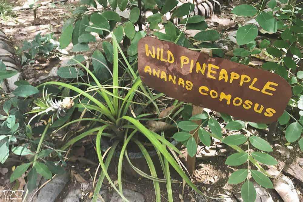 Sipe garden in Sri lanka