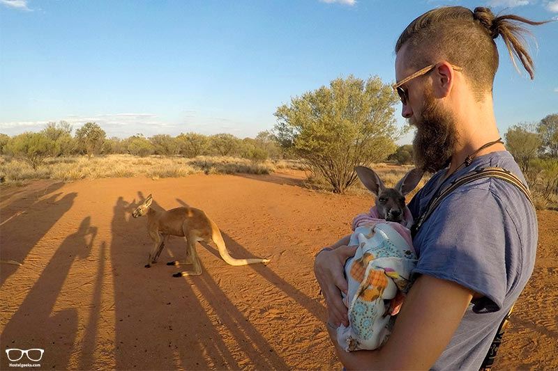 Kangaroo Sanctuary things to do in Alice Springs