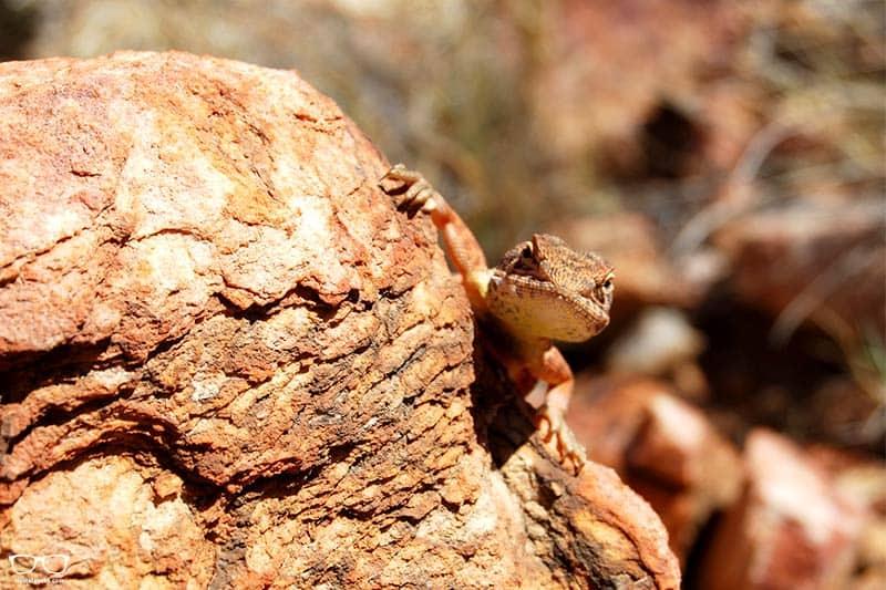 Alice Springs Desert Park, things to do in Alice Springs