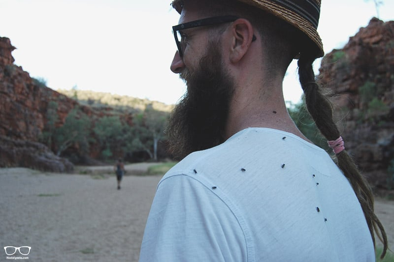 Flies in Alice Springs, Australia