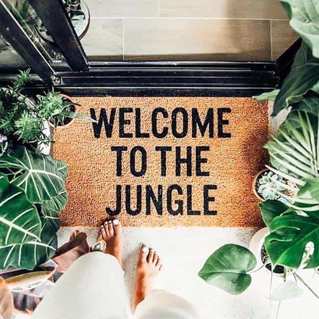 Best Boutique Hostels in Malaga; Urban Jungle Hostel