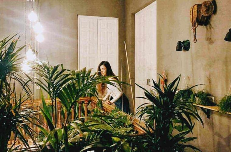Urban Jungle Hostel in Málaga - Fresh and Green Boutique Hostel in the Heart of the city