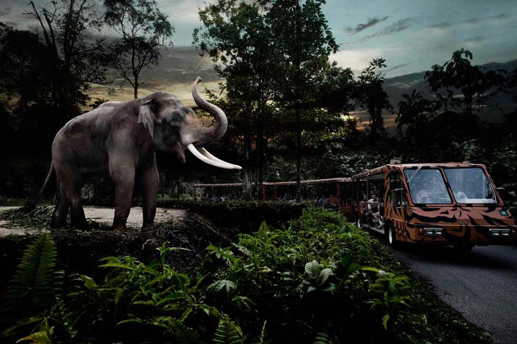 Night Safari in Singapore; one of the interesting things to do in Singapore for families