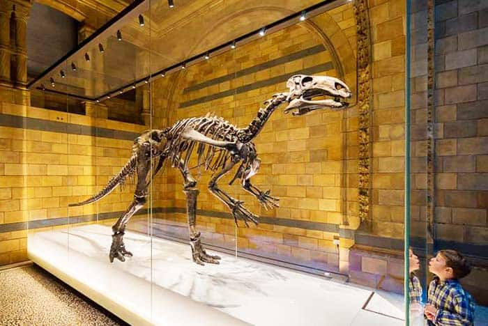 Have a 3D Virtual experience at the Natural History Museum
