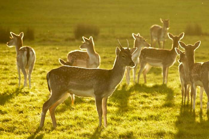 See animals in front of your eyes in Richmond Park