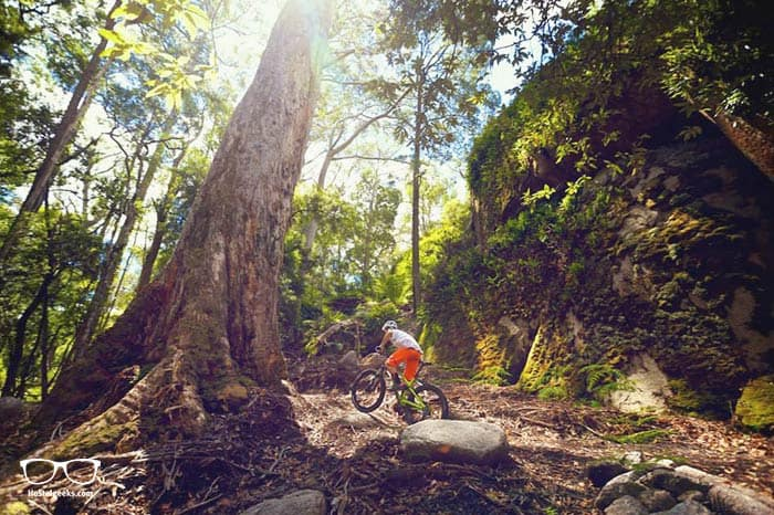 Riding the Blue Derby Mountain Bike Trails is one of the fun things to do in Tasmania, Australia