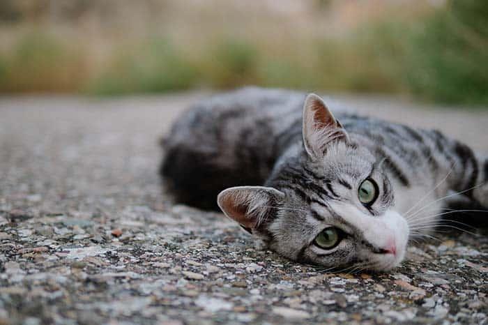Village of Cats, 20 Fun Things To Do in Taipei, Taiwan
