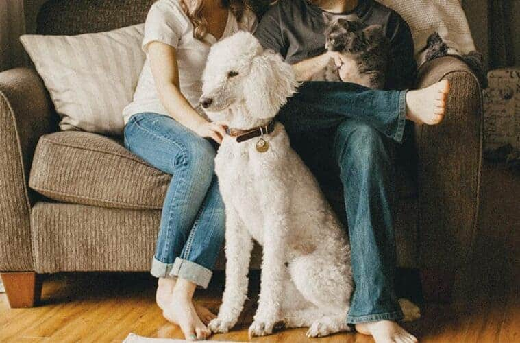 Honest TrustedHousesitters review - pros, cons & reasons to choose Trust House Sitters